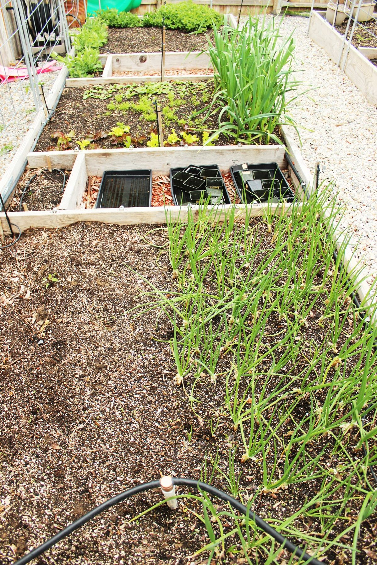 Raised Garden Beds 101: Tips on Planning, Building, & Using