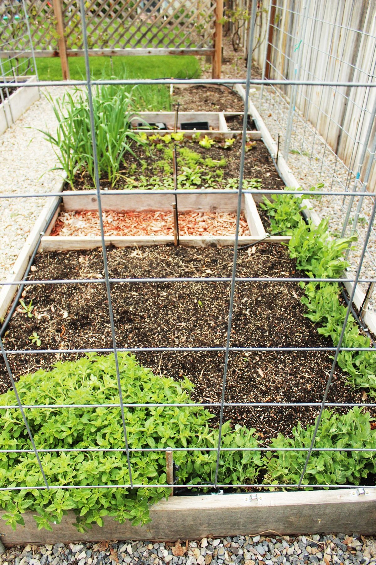 Raised Garden Beds 101 Tips On Planning Building Amp Using