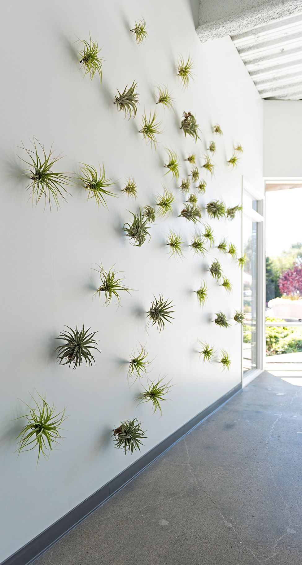 12 diys to get air plants on your wall for Air plant decoration