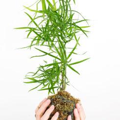 Beautiful Kokedama planter