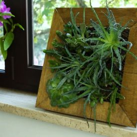 Fashion A Frame Planter For Succulents