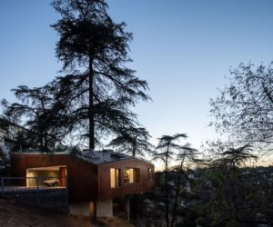A House Built Around Trees In A Densely Populated Area