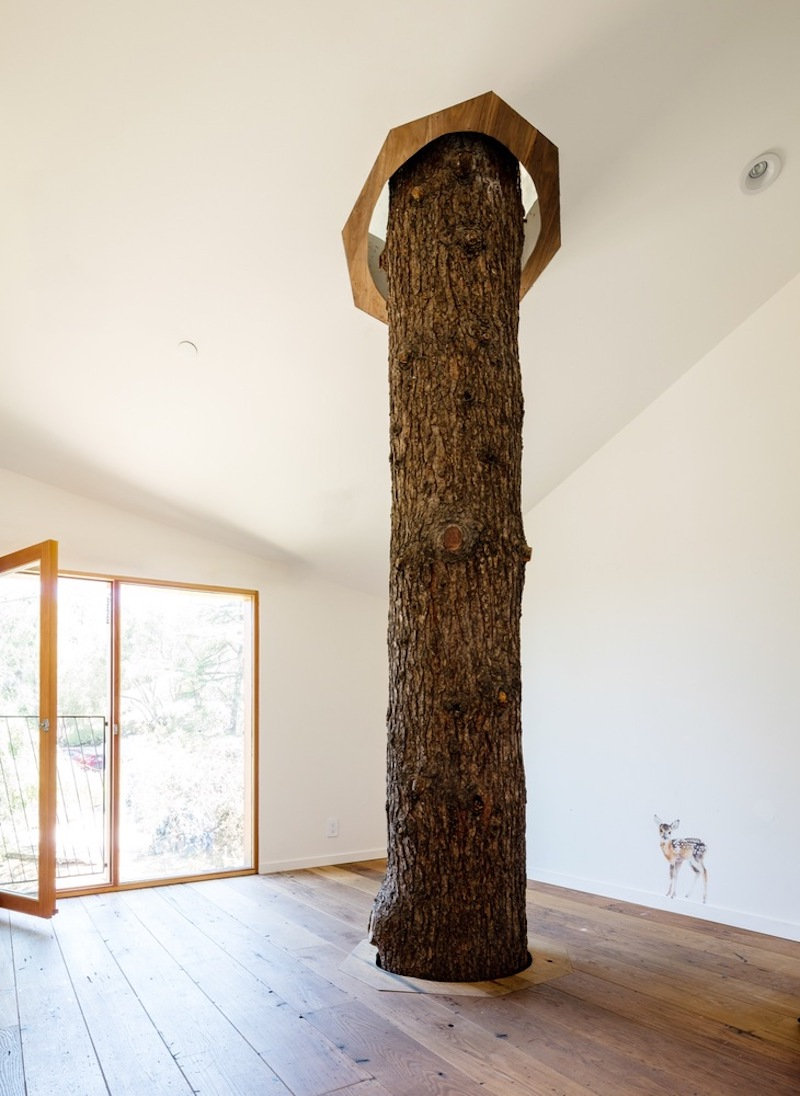 A mature and very tall tree rises through the floor and pierces the ceiling, its trunk becoming a part of the home