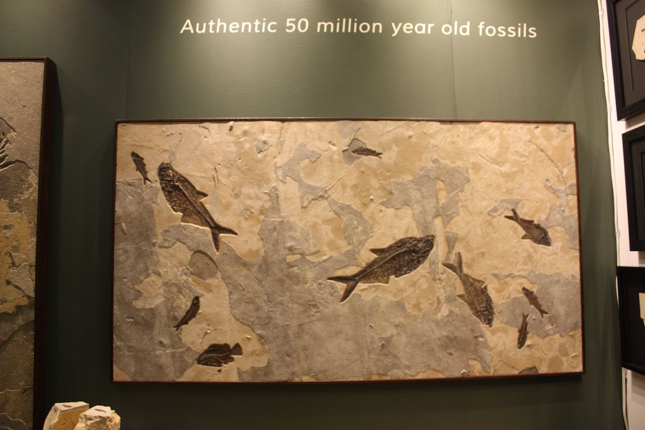 The fossils come from Wyoming.