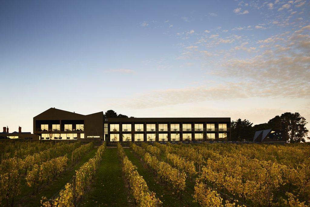 The Vineyard Vines Landscape