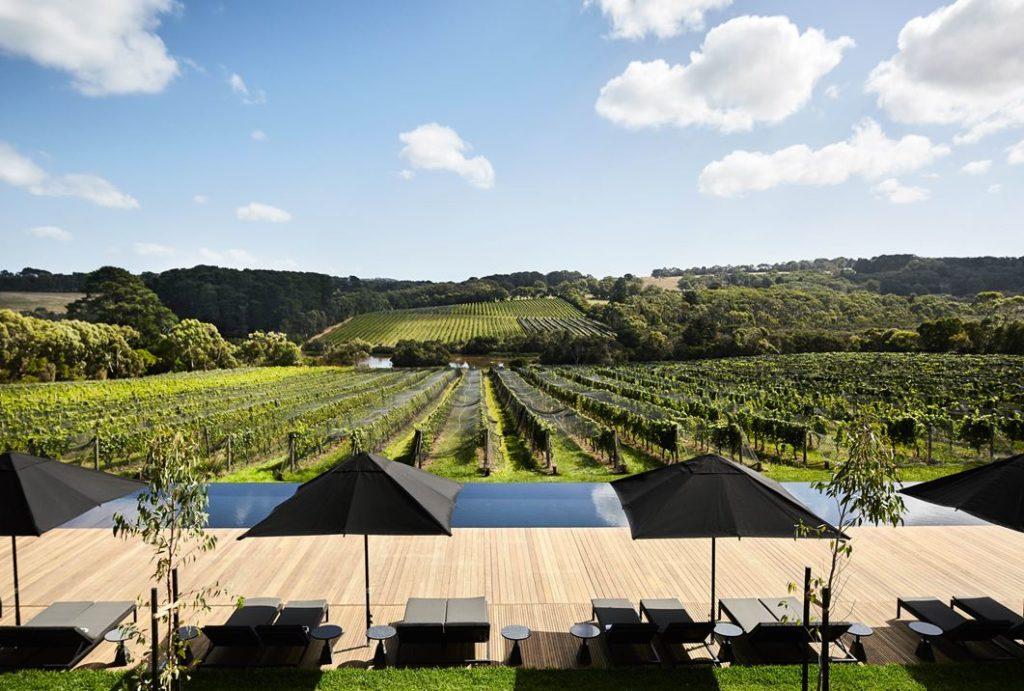 Overlooking the sculptural landscape of vines