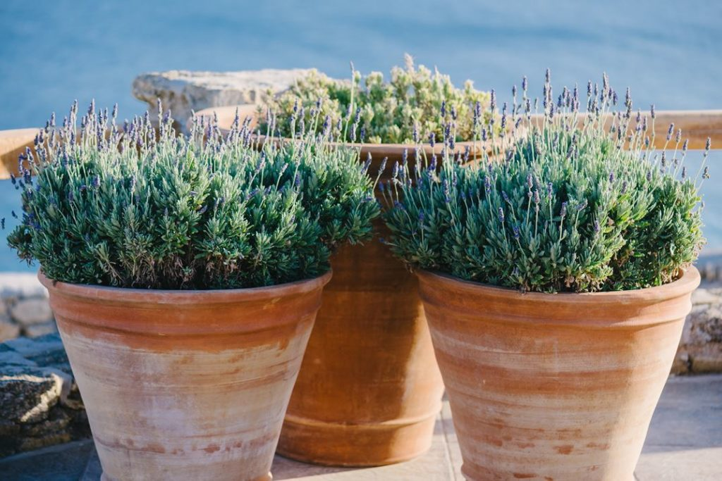 Rustic clay pots of lavender accent the outdoors and highlight the Mediterranean atmosphere.