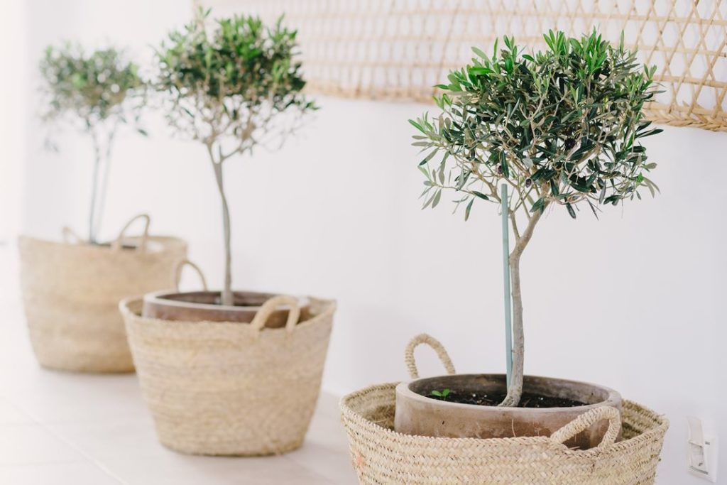 Mediterranean plants in natural pots enhance the setting.