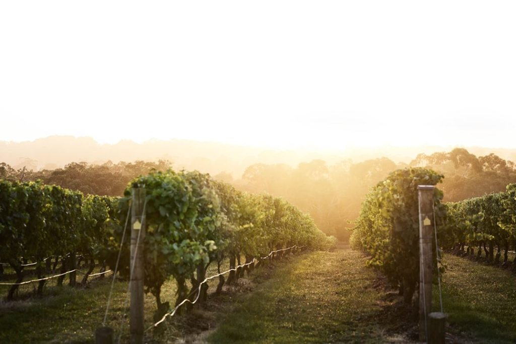 The feel of the view changes with the daylight that hits the 21-hectare vineyard.