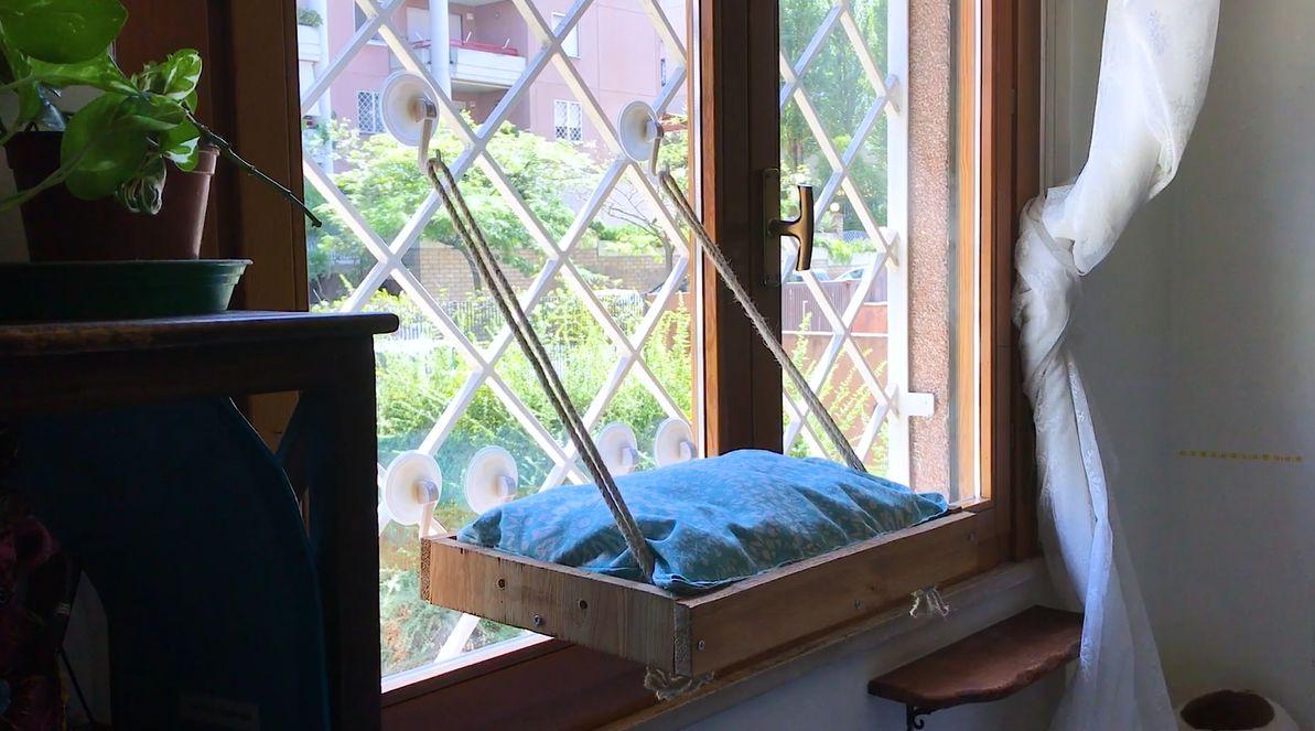 A Diy Cat Window Perch