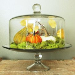 DIY Domed Pumpkin Patch-cake stand and dome create a beautifully