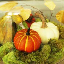 DIY Domed Pumpkin Patch- color of your pumpkin