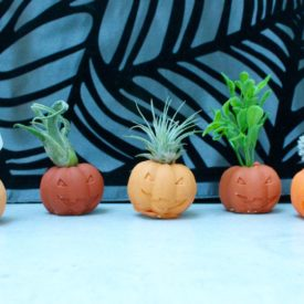 Mini pumpkin from clay with air plants