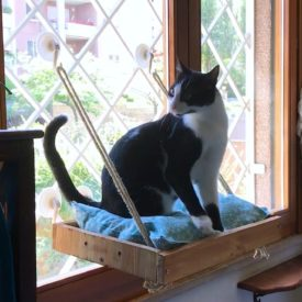 A DIY Cat Window Perch/Seat