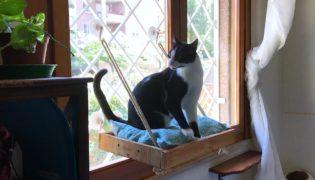 A DIY Cat Window Perch/Seat