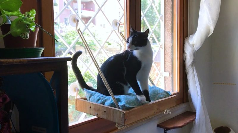 A DIY Cat Window Perch