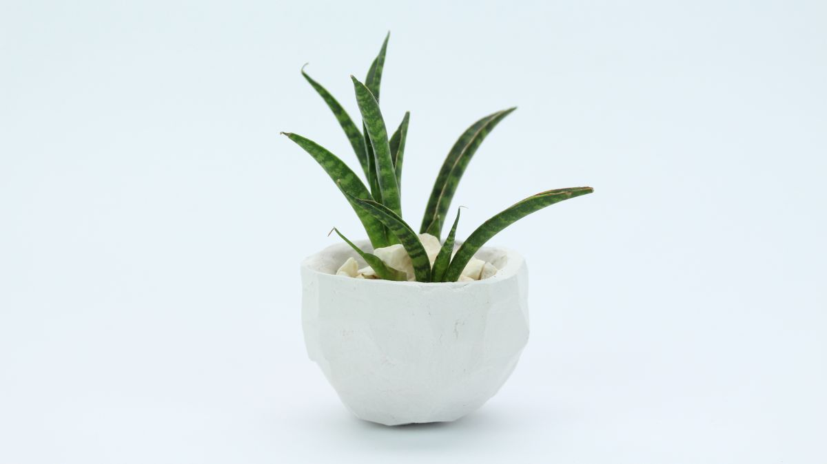 Clay geometric planter