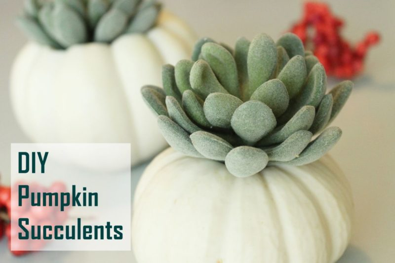 DIY Pumpkin Succulent Decorations
