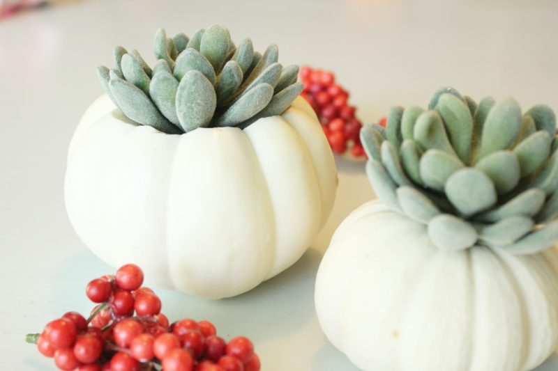 DIY Pumpkin Succulent Decorations