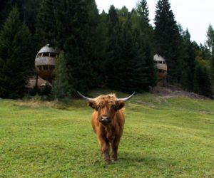 Two Pinecone-Shaped Tree Houses Hidden In The Italian Alps