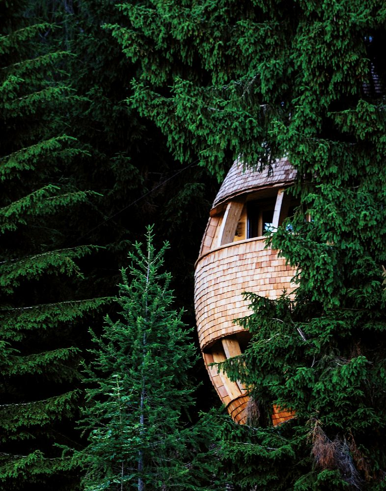 These large pinecone-like nooks are hidden in Italy's oldest forest, among spruce trees