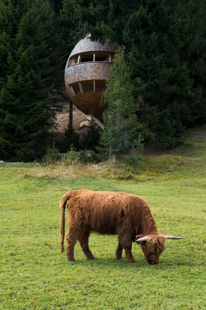 The tree houses are designed to resemble oversized pinecones, a look that helps them fit naturally into the forest