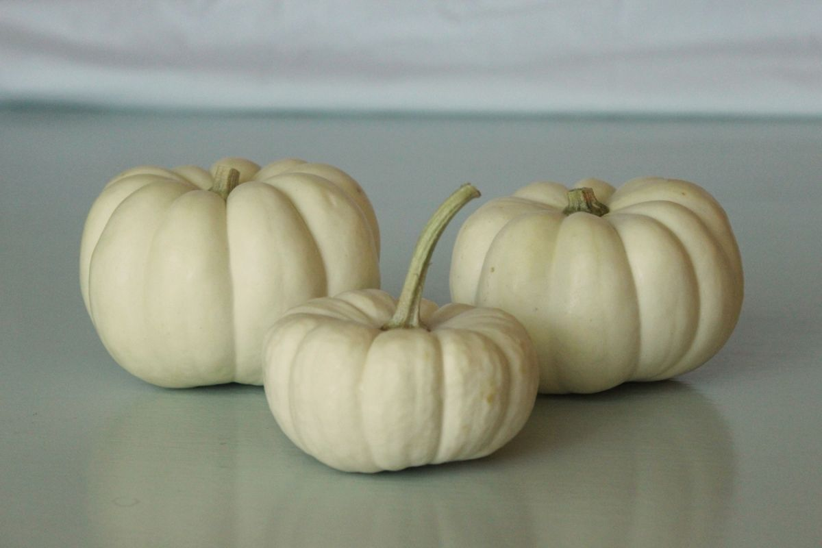 White Pumpkin Centerpieces- Mini white pumpkins are readily available