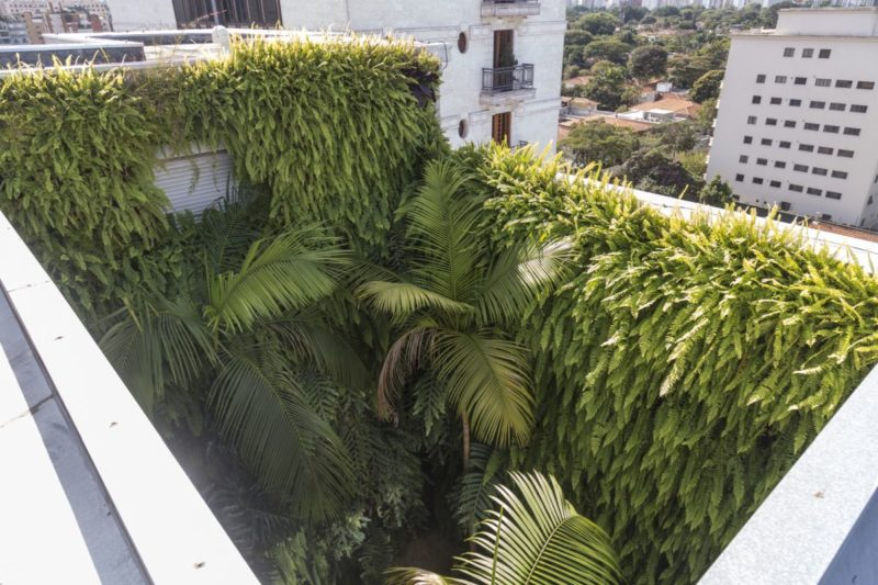 Secret Gardens in Sao Paolo City Apartment Create a Jungle Atmosphere