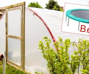 23 Inspiring Greenhouse Plans With Amazing Results