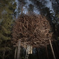 The Birds Nest TreeHotel