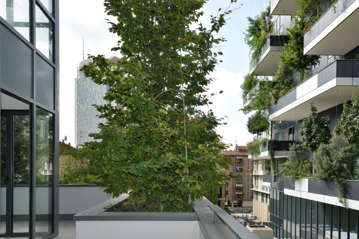 The trees and the shrubs and plants also absorb CO2 and dust particles and help to create a fresh environment