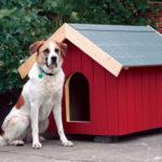 DIY dog house red color