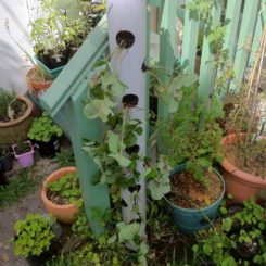 Vertical planter made from PVC pipe