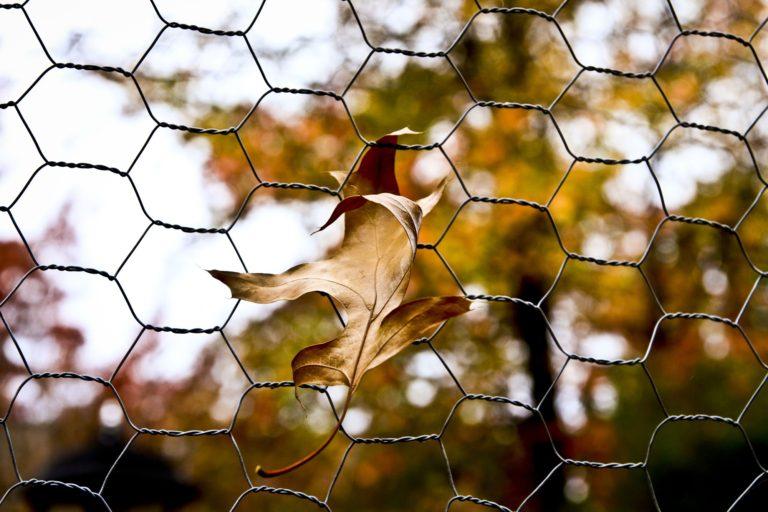 diy fence Chicken Wire Garden Fence
