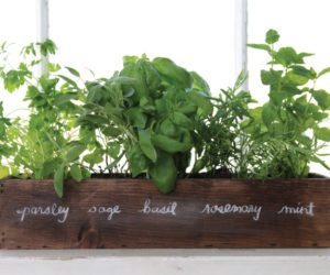 How To Grow Your Very Own Indoor Herb Garden U2013 Tips And Ideas