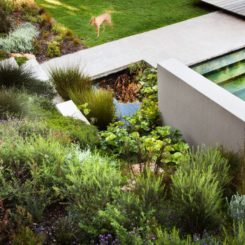 Lush vegetation for backyard design