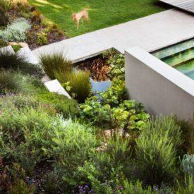 Lush vegetation for backyard design