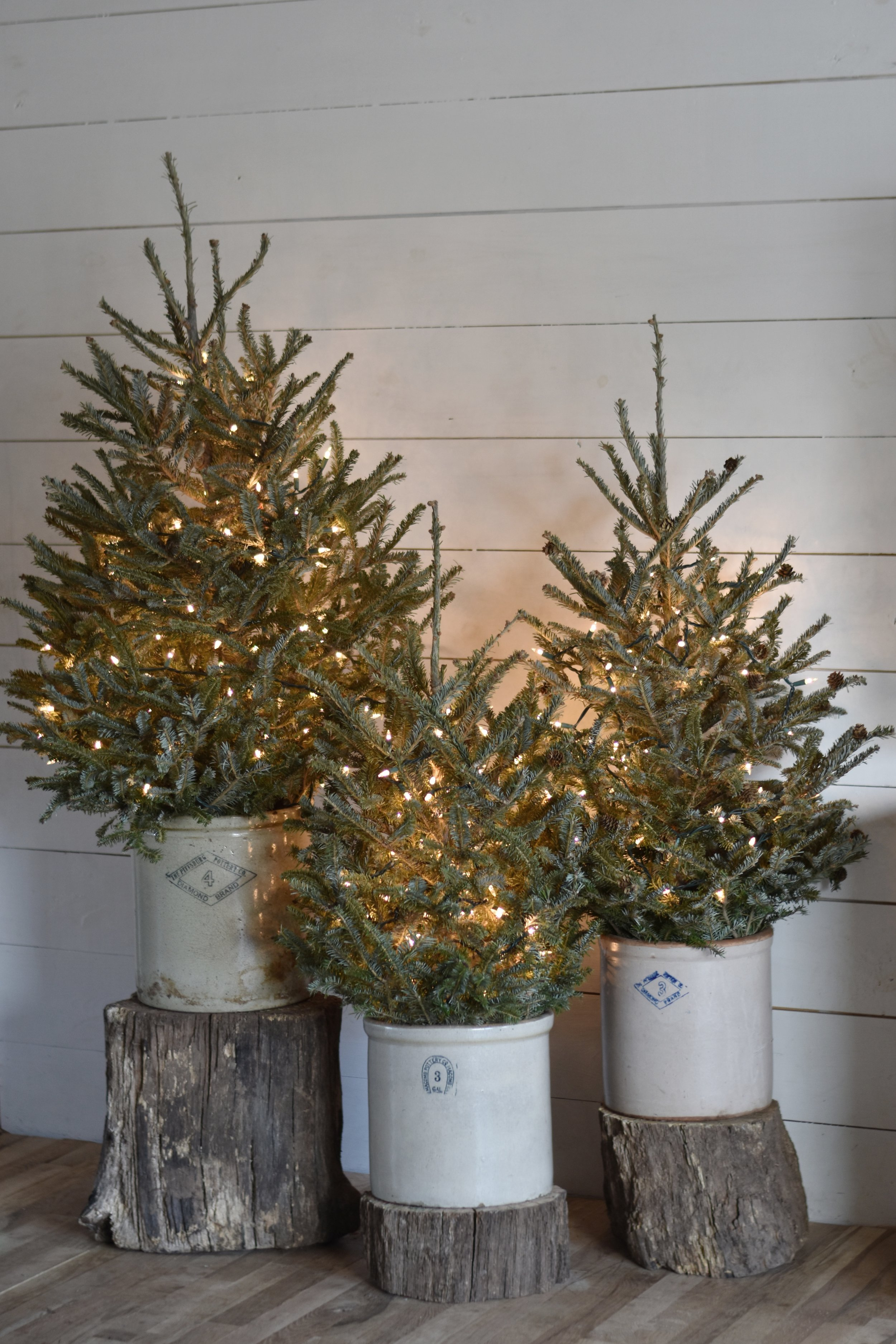 How To Decorate With Mini Christmas Trees - Cute And ...
