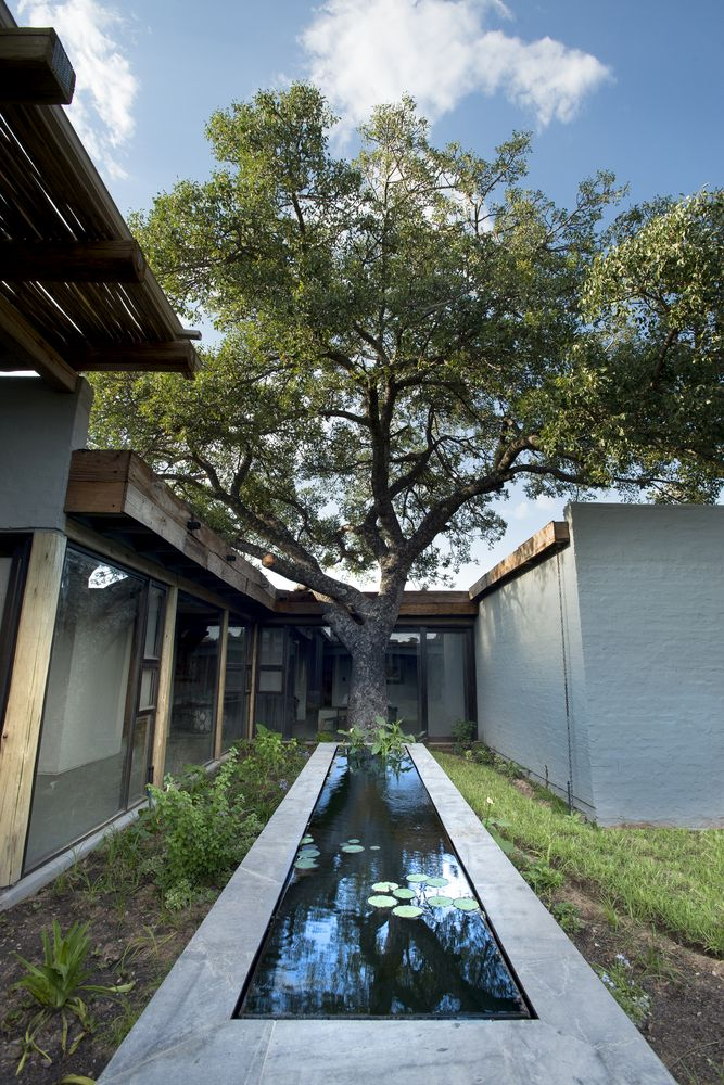 A small courtyard is formed around a tree which has been preserved on the site