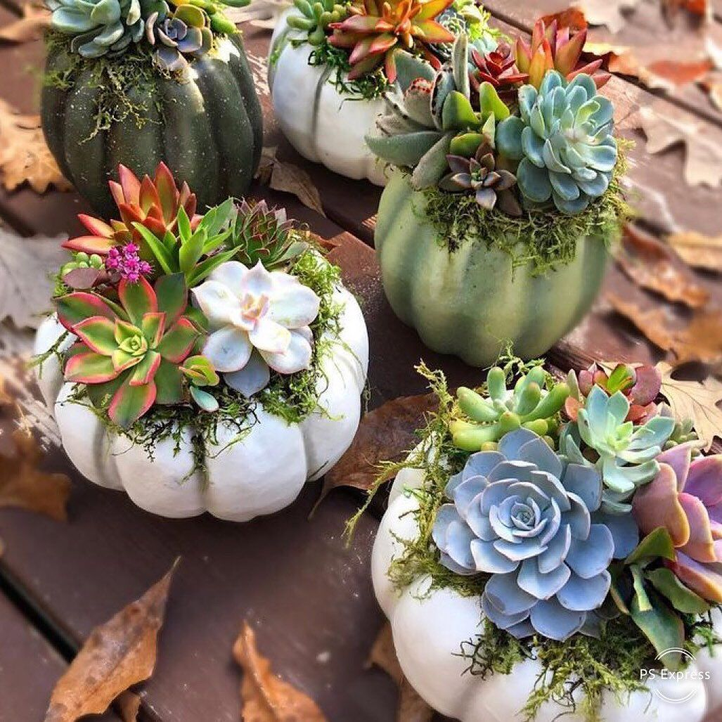 Succulent Pumpkin Display