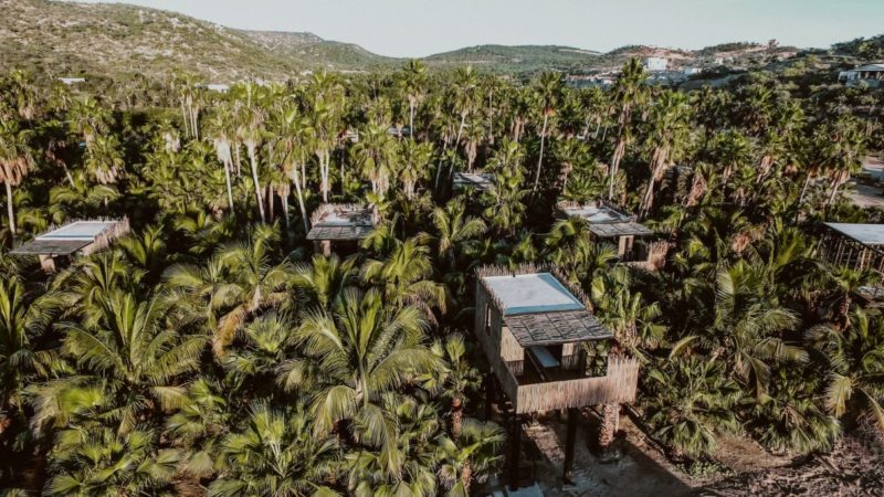 A Charming Resort Hidden Among Mango And Palm Trees