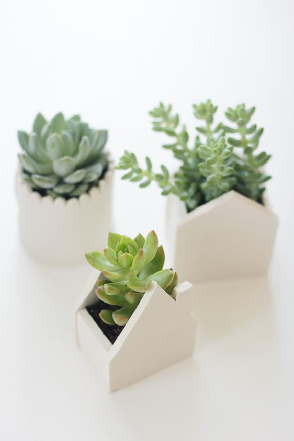 Clay Pots for Succulents