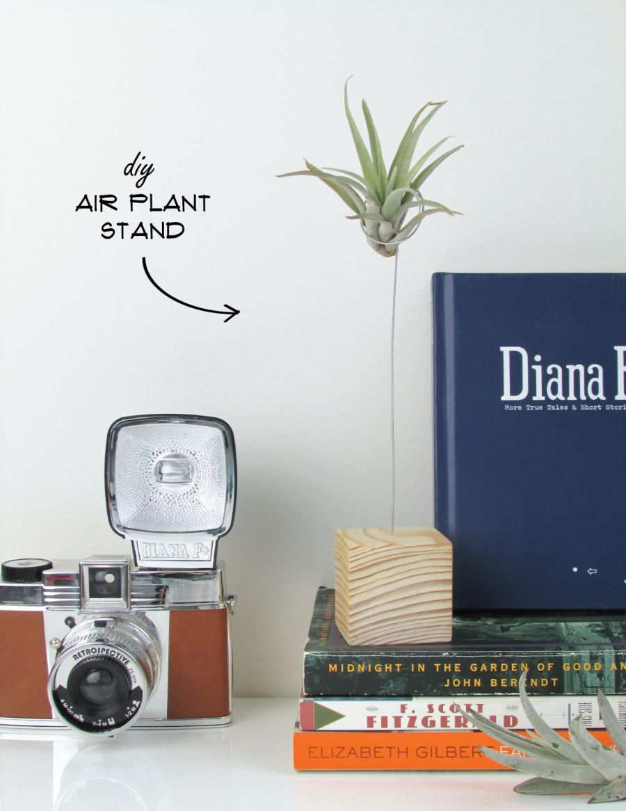 Minimalist air plant stand