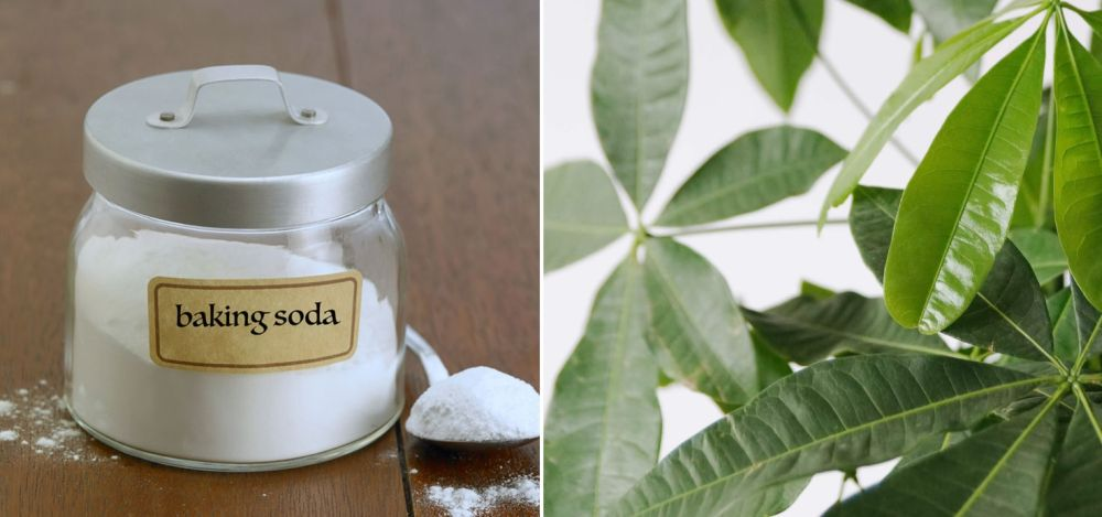 A Dozen Great Uses For Baking Soda In The Garden