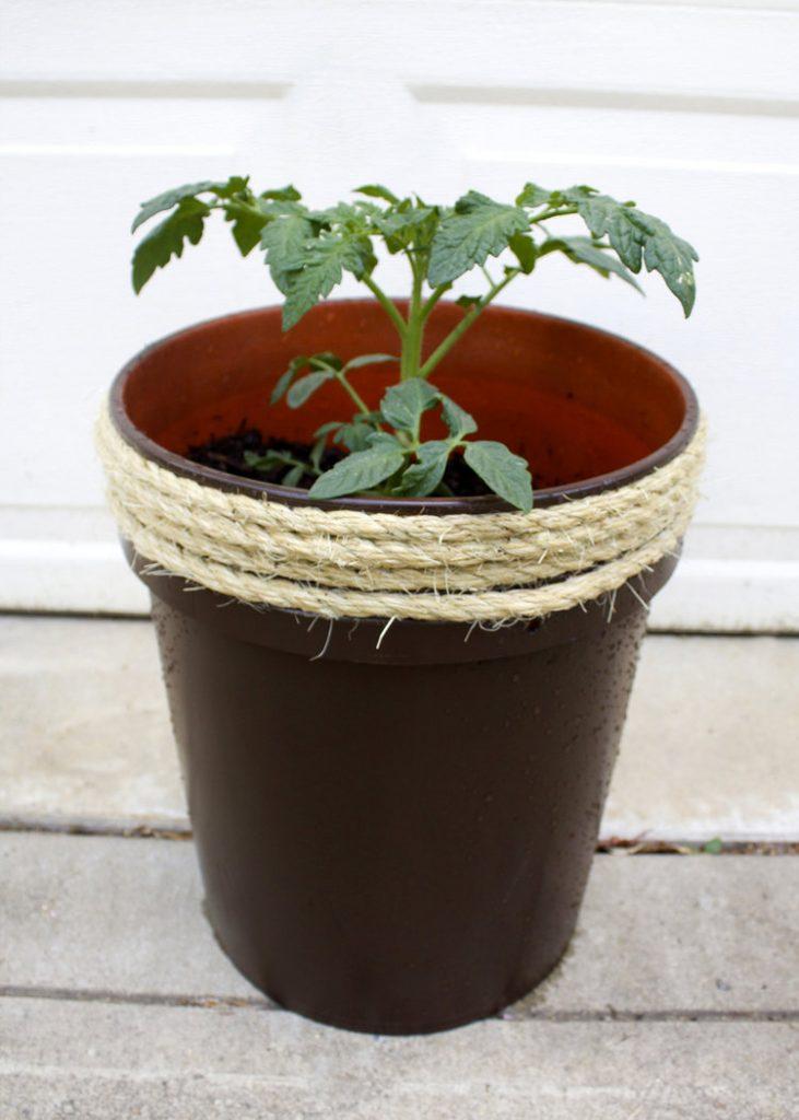 planter box ideas Five Gallon Bucket Planter