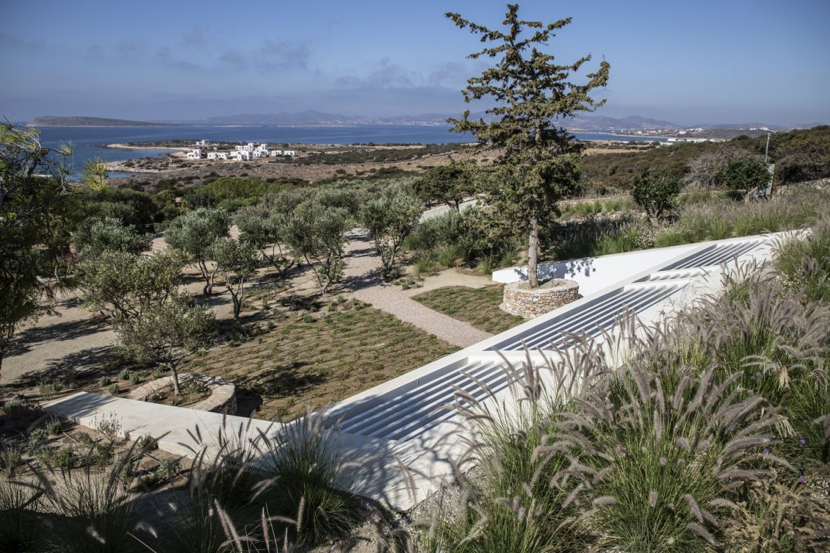 The site is delineated by a small olive grove to the south and a cluster of pine trees to the east
