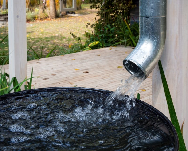 Collect Natural Rain To Water Your Garden With A Water Barrel