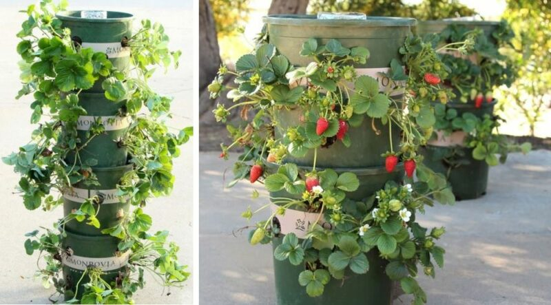 31 Creative Gardening Hacks And Crafts That Will Make Your Plants Extra Happy