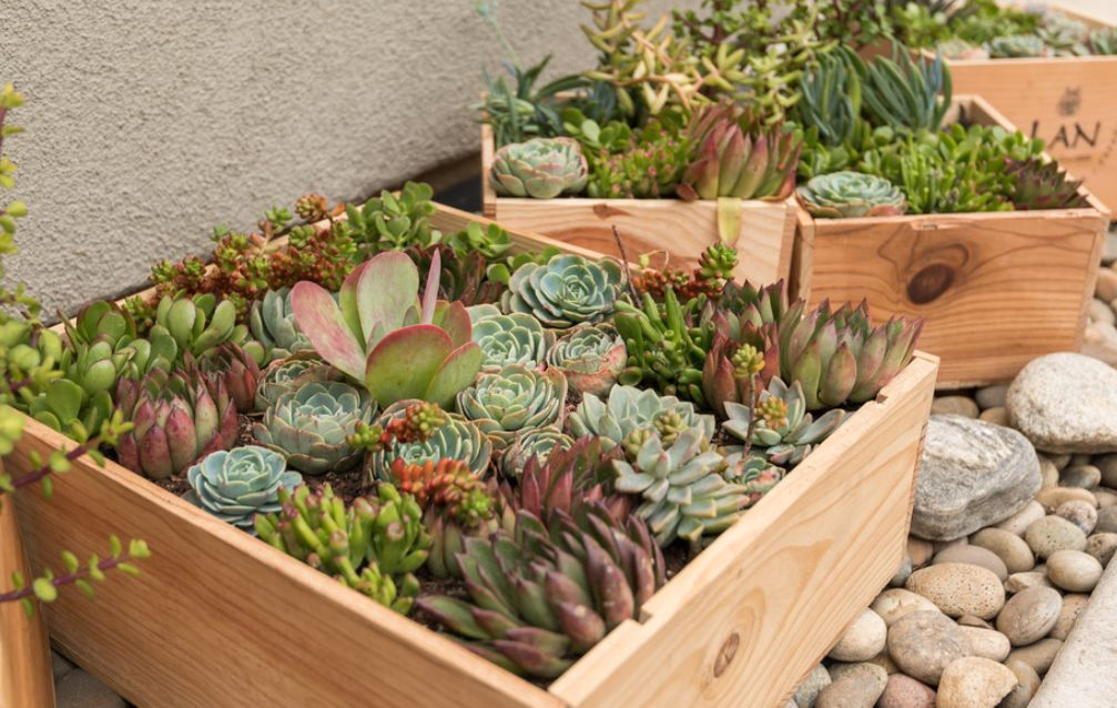Gorgeous Designs and Ideas For Your Very Own Succulent Garden
