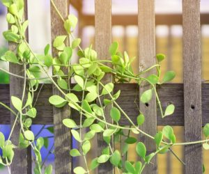 Spruce Up Your Porch Or Patio With Trellis Planter